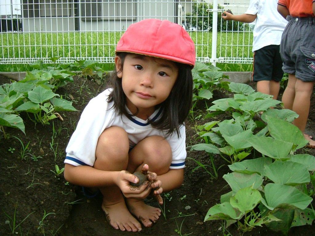 kinderen tuinieren papaver delft