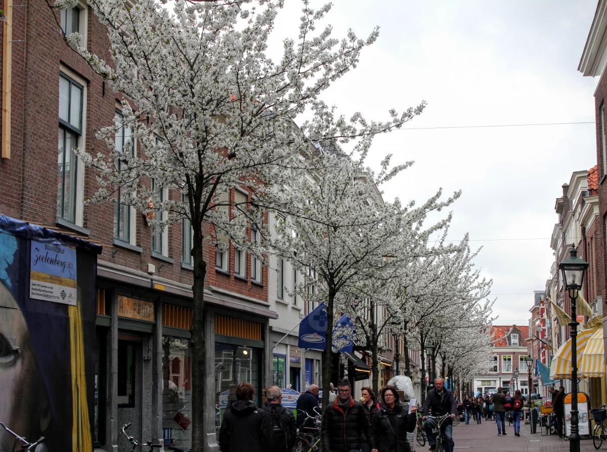 Choorstraat bloesem