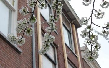 Bloesem Delft