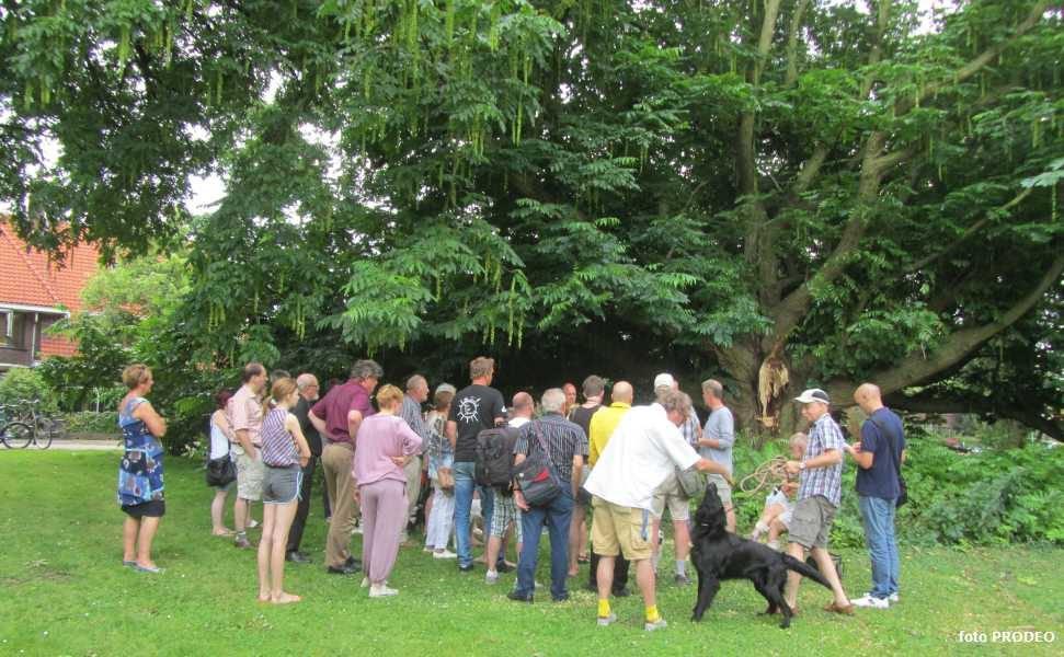 boom gered door buurtbewoners Westplantsoen