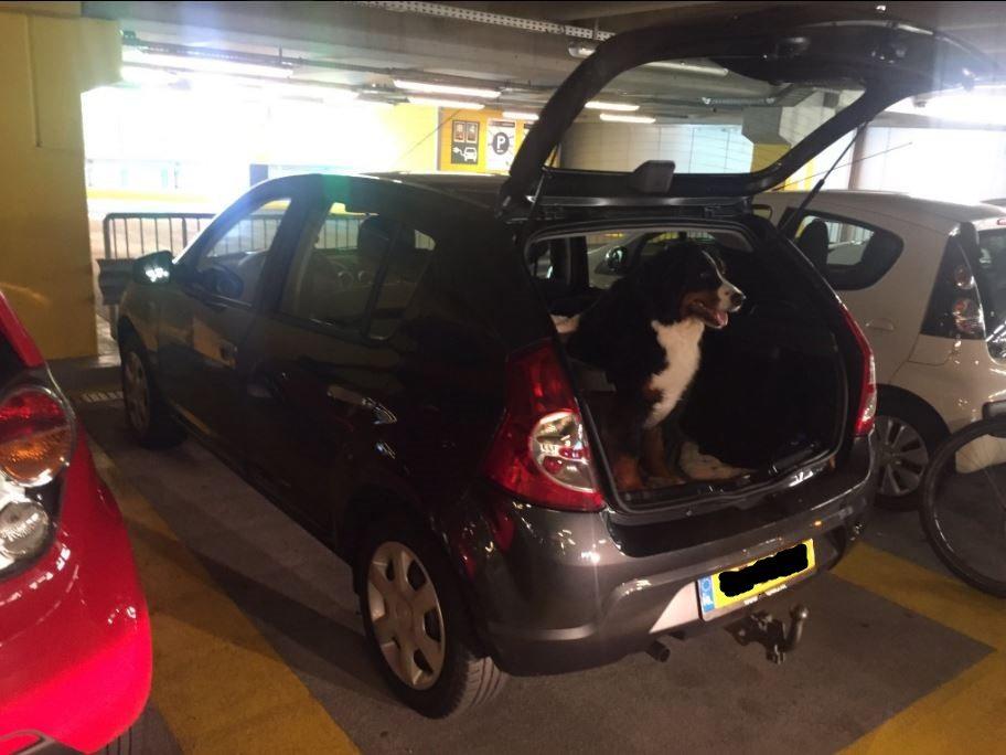 auto hond hoven passage