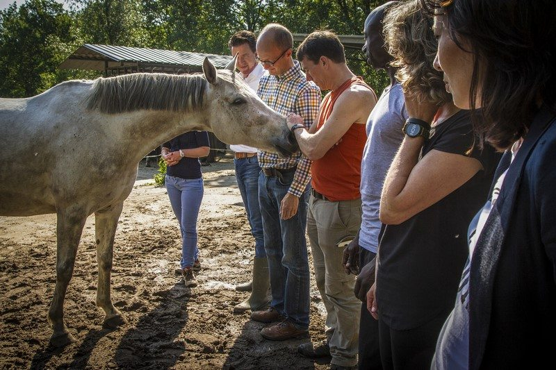 schrijfhulp Werksessie paardeninzichten samenwerken