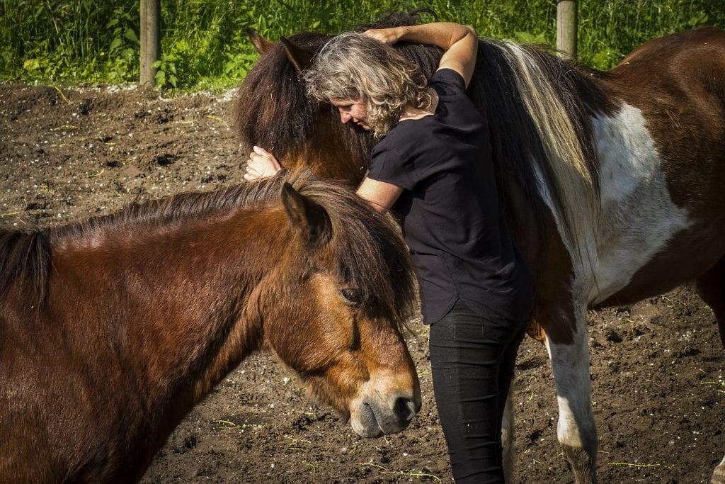 paardeninzichten