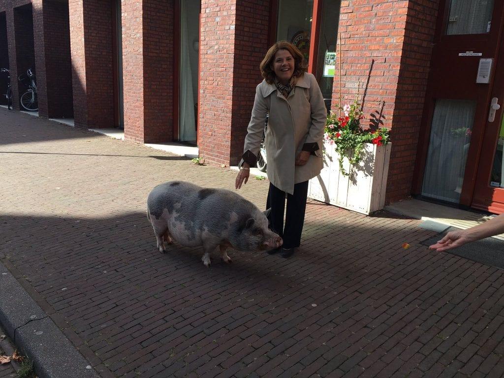 dierendag-dieren-delft-burgemeester-stadsvarken-bob-varken