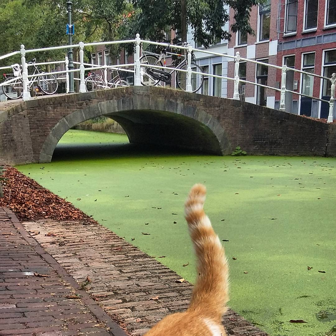 kat-uit-de-gracht-1
