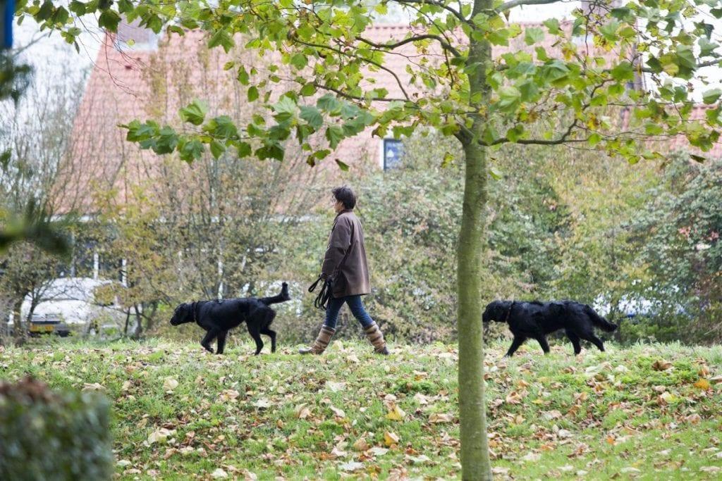 hond uitlaten bij Ruilkring Delft