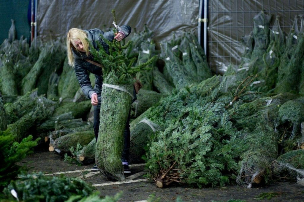 ikea-kerstboom-kerstbomen-aanbieding