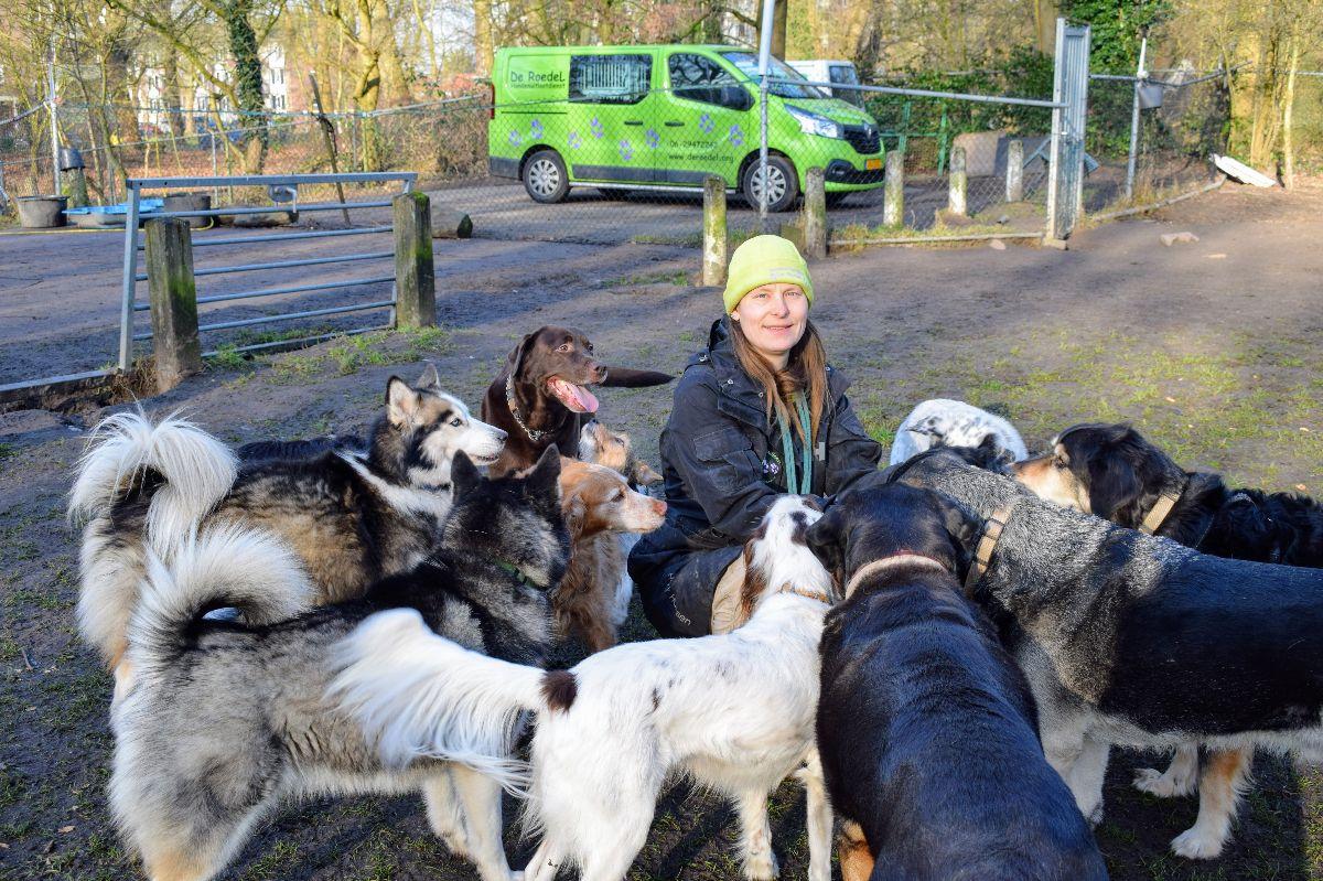 de roedel delft hondenuitlaatdienst