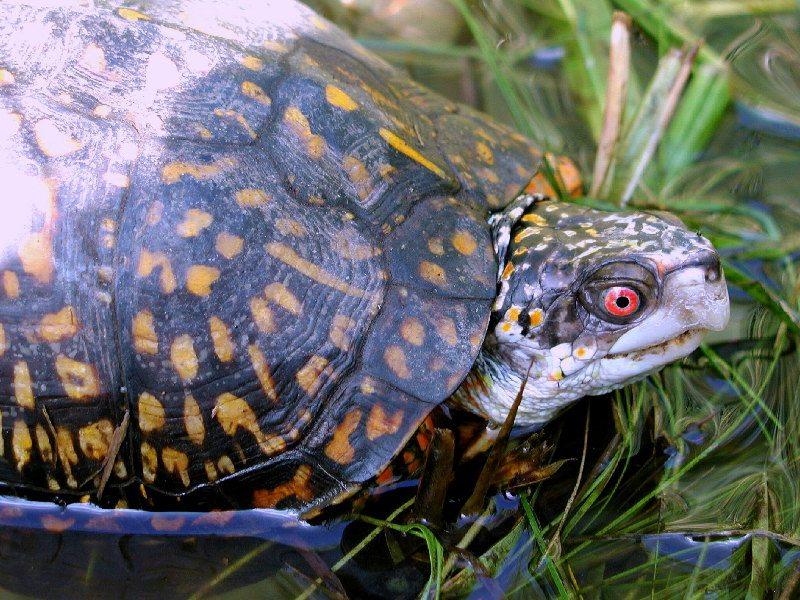 schildpad exotische dieren