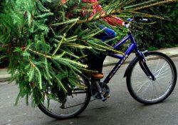 kerstboom ophalen wegbrengen