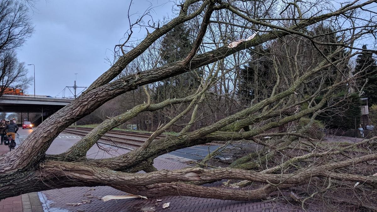 boom omgewaaid storm