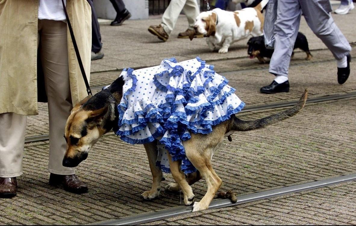 hondenpoep delft