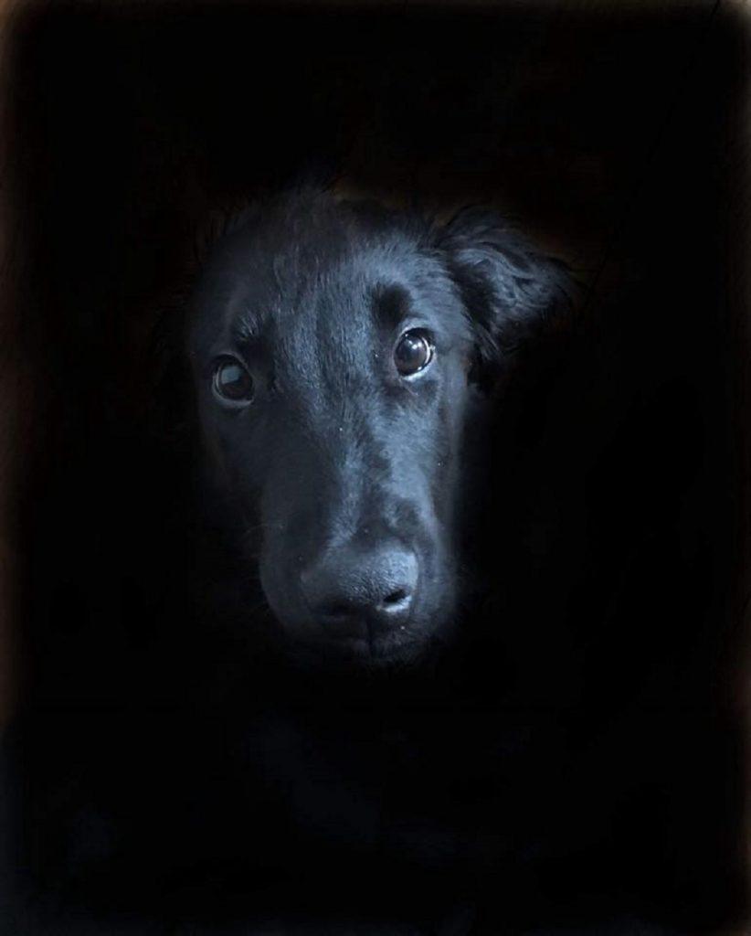 Bentley hondenverkiezing