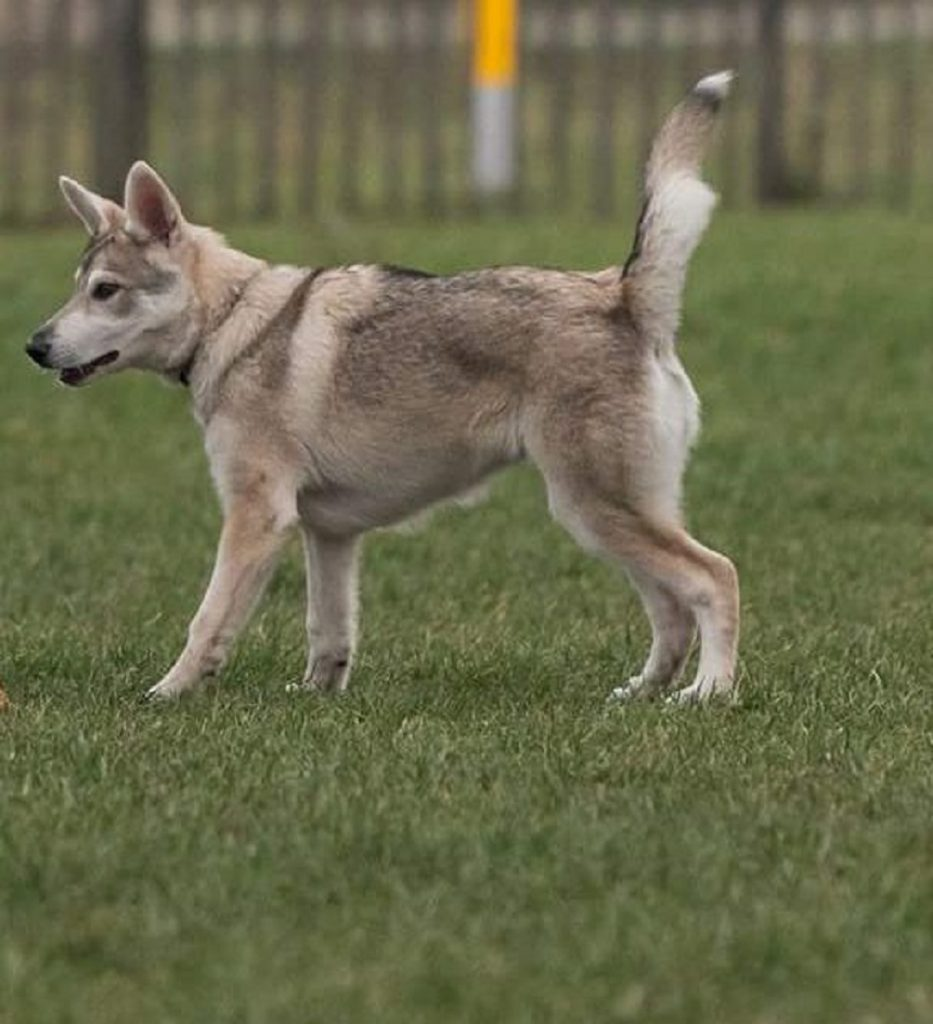 hondenverkiezing Luna