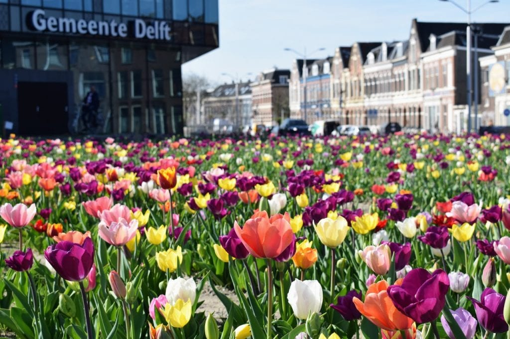 tulpen station delft gemeentehuis house of delft