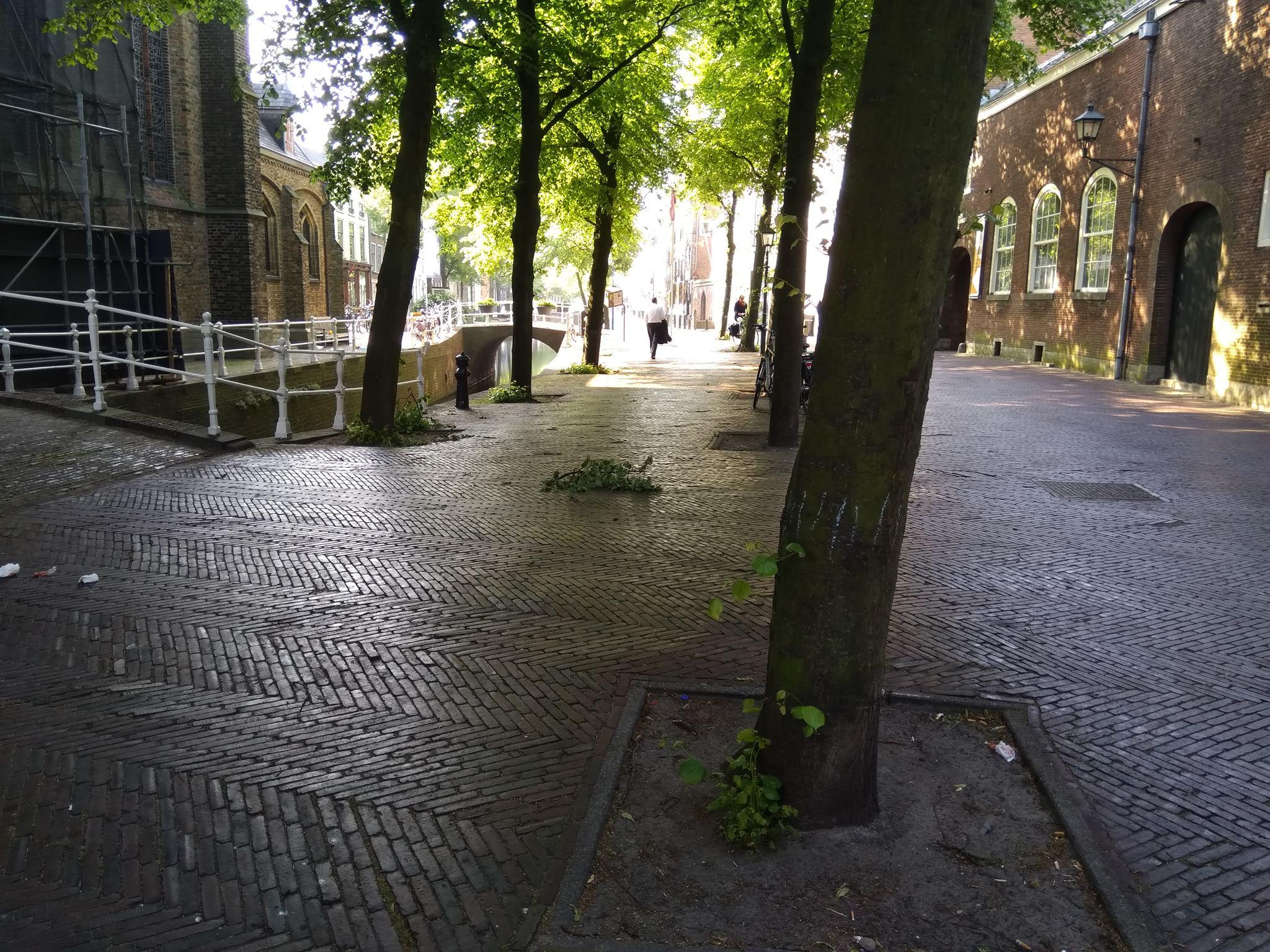Bladluis en plakkerige straten