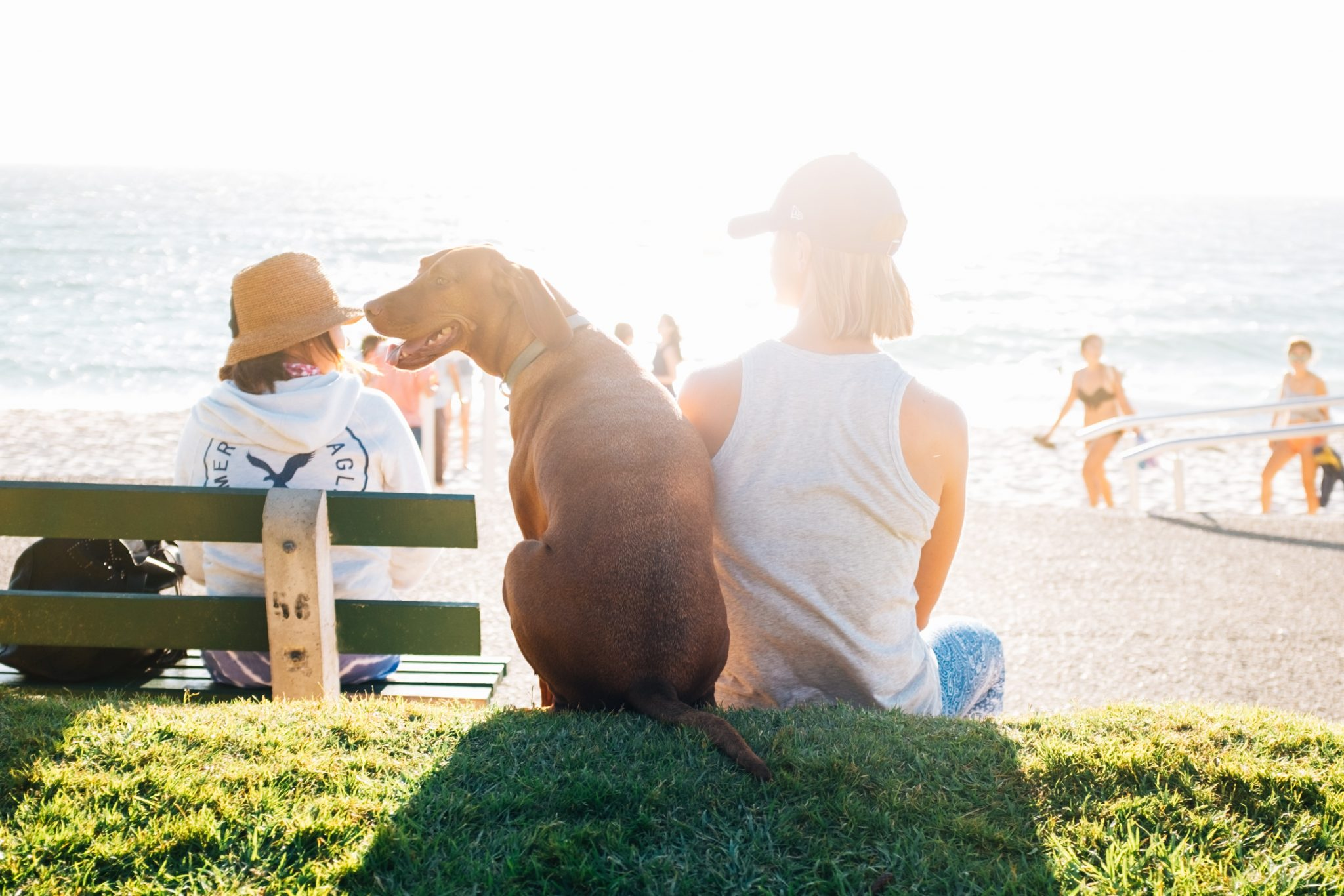 hond zon strand