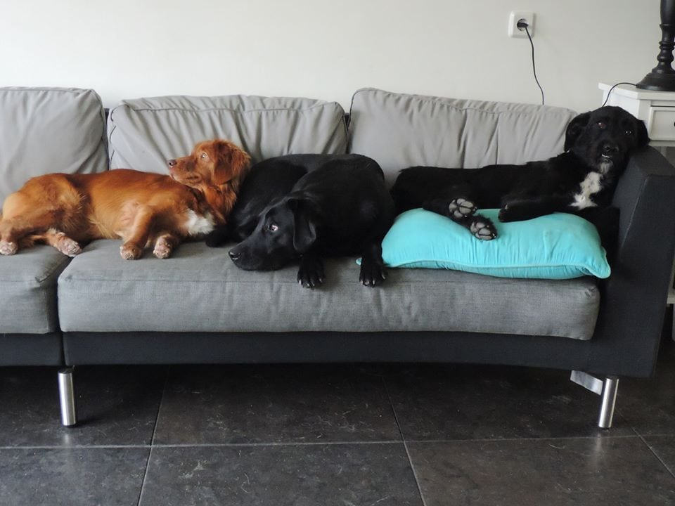 Doggie Place Honden