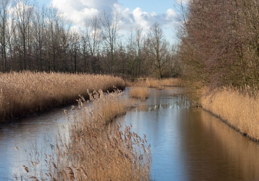 abtswoudsebos delft