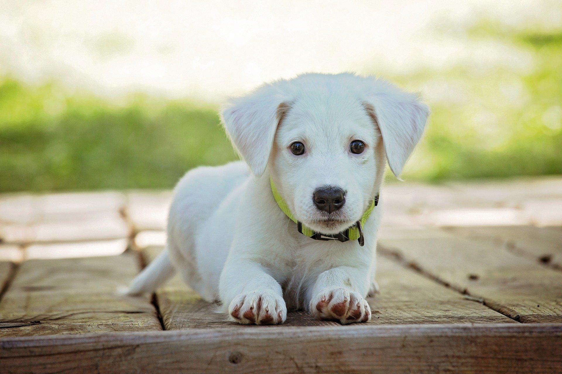mooiste hond 2020