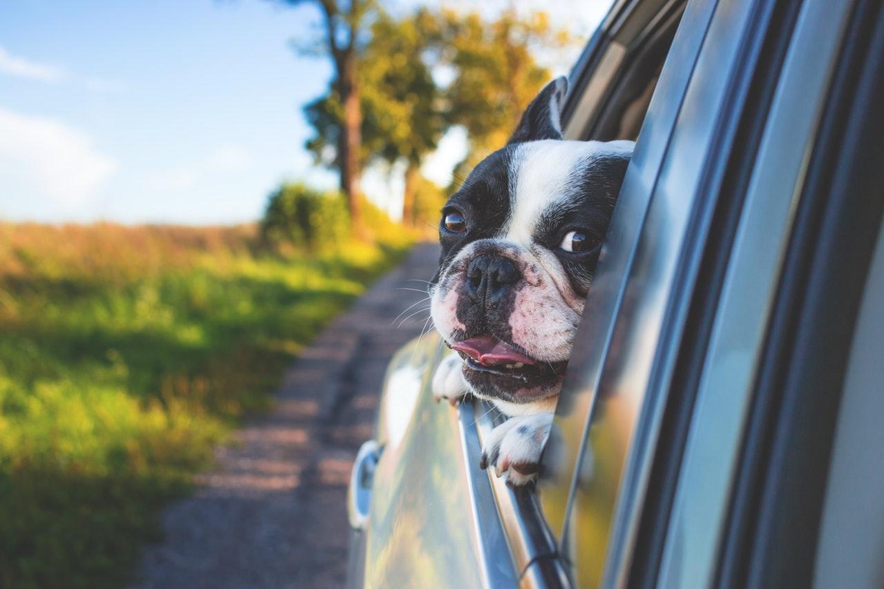 hond-auto