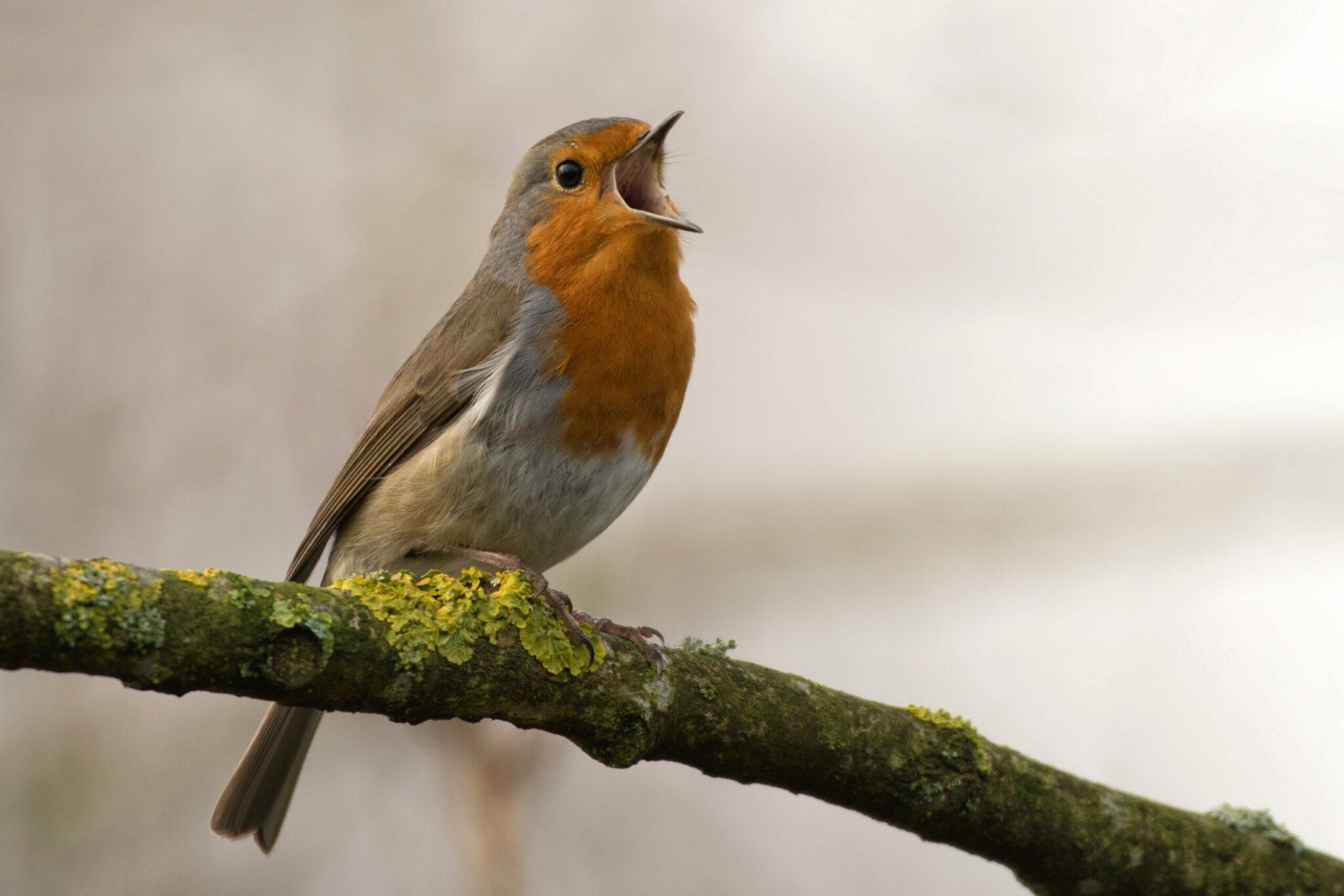 Vroege vogels via Unsplash