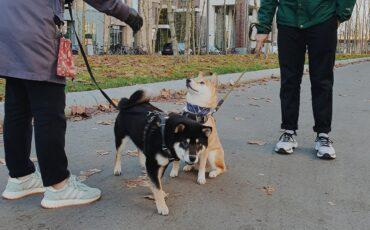 hond uitlaten corona