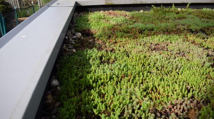 Groen dak Interpolis