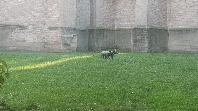 honden bergkerk