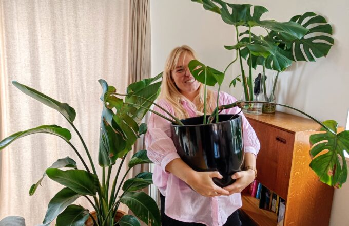 Planten aanbieding