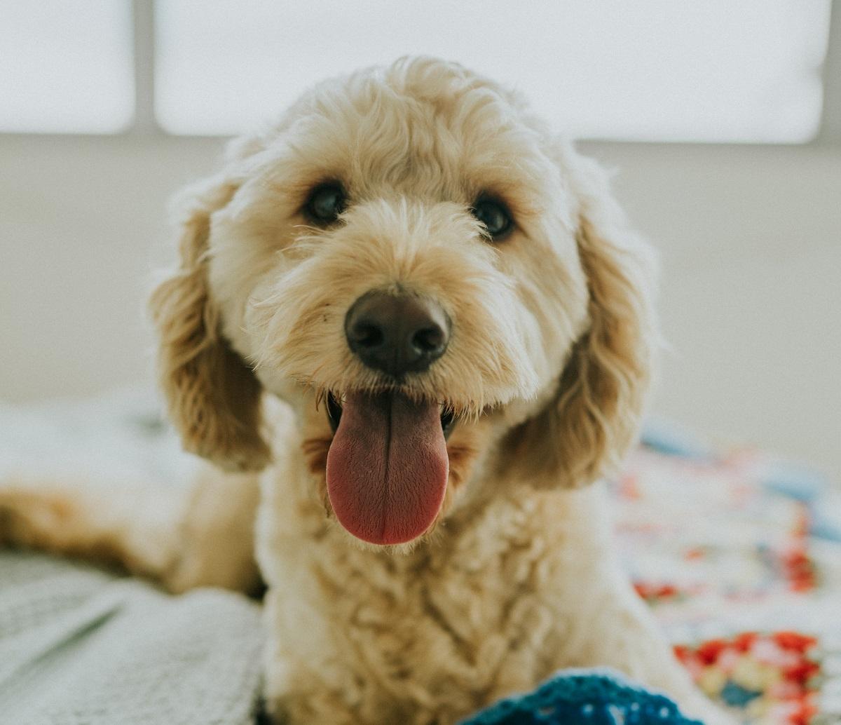 oud-en-nieuw-vuurwerk-jaarwisseling-huisdieren-hond-2