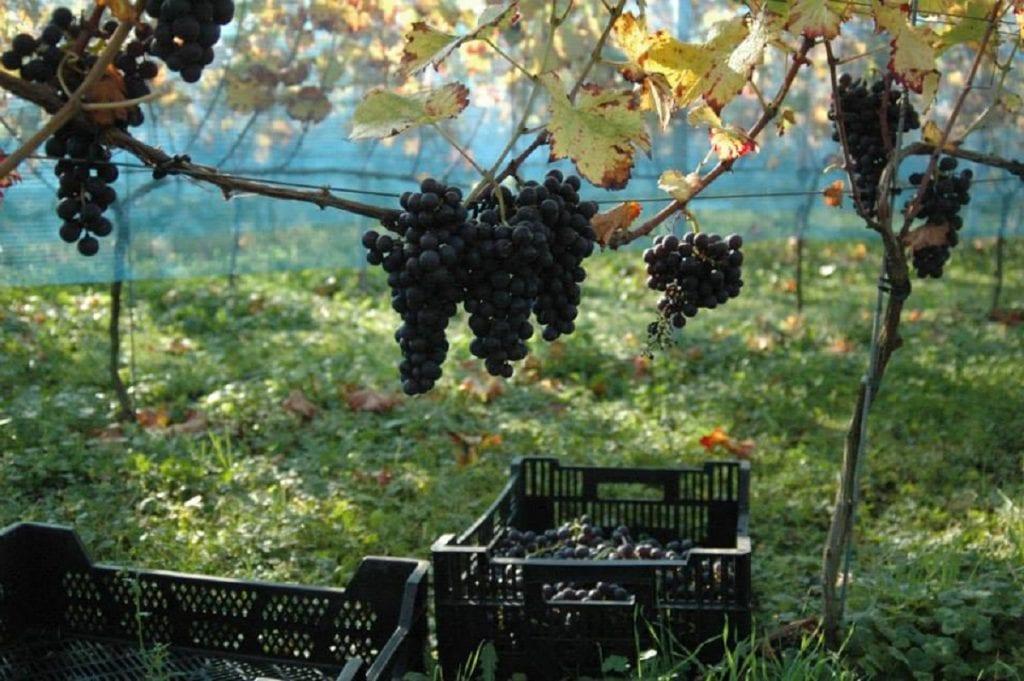 wijnproeverij-doetinchem-wijngaard-duetinghem-838
