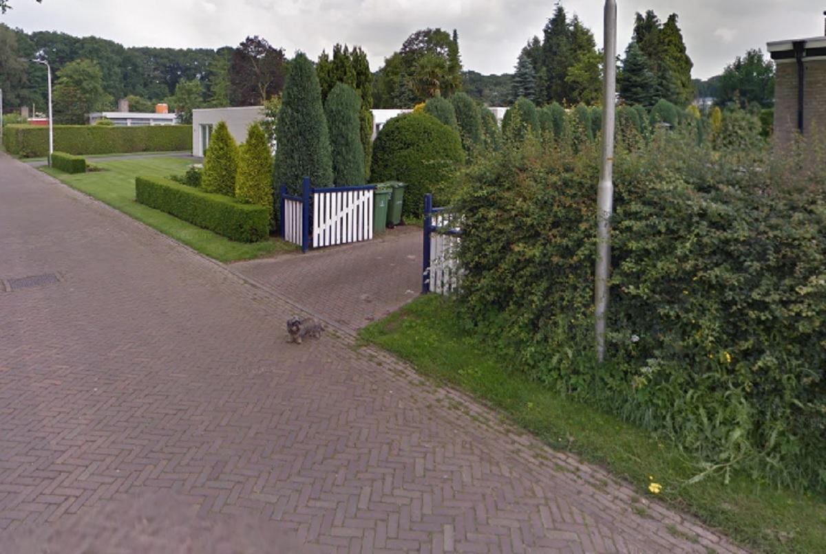 doetinchem-honden-en-baasje-google-streetview-9