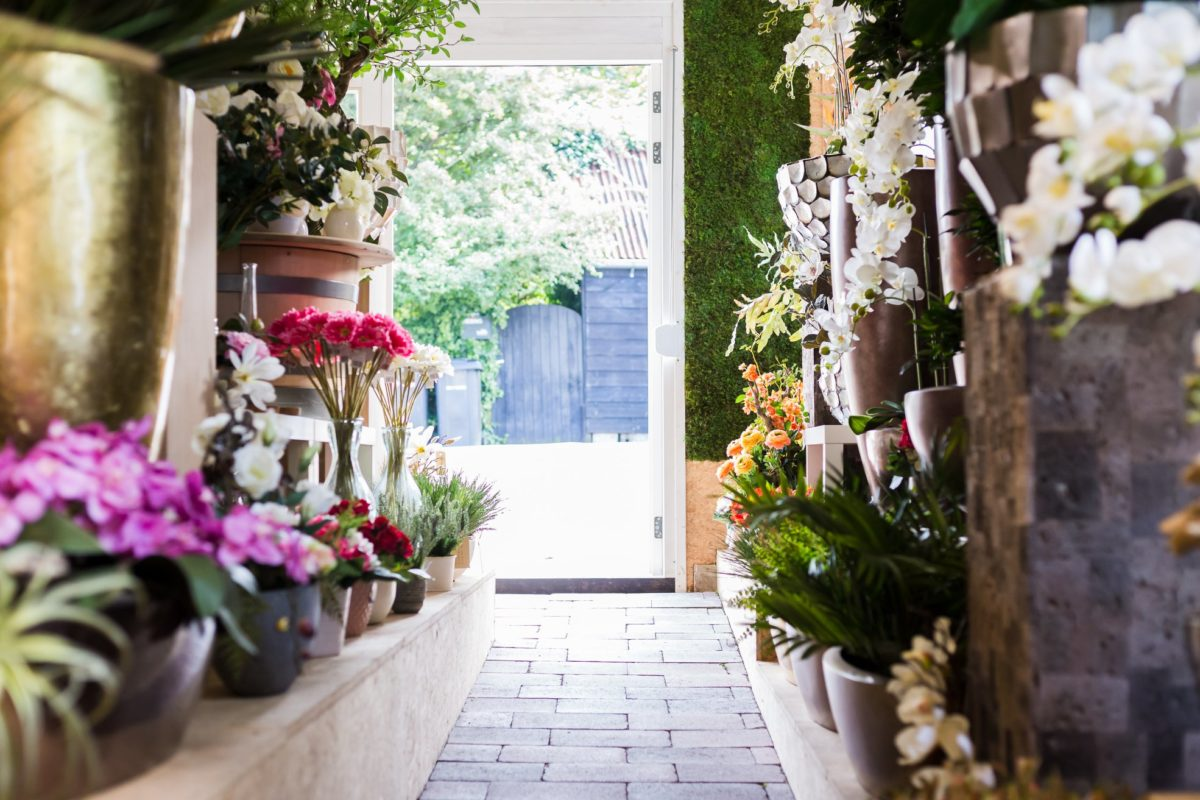 Kamerplanten Dordrecht - Insta-Green - indebuurt Dordrecht