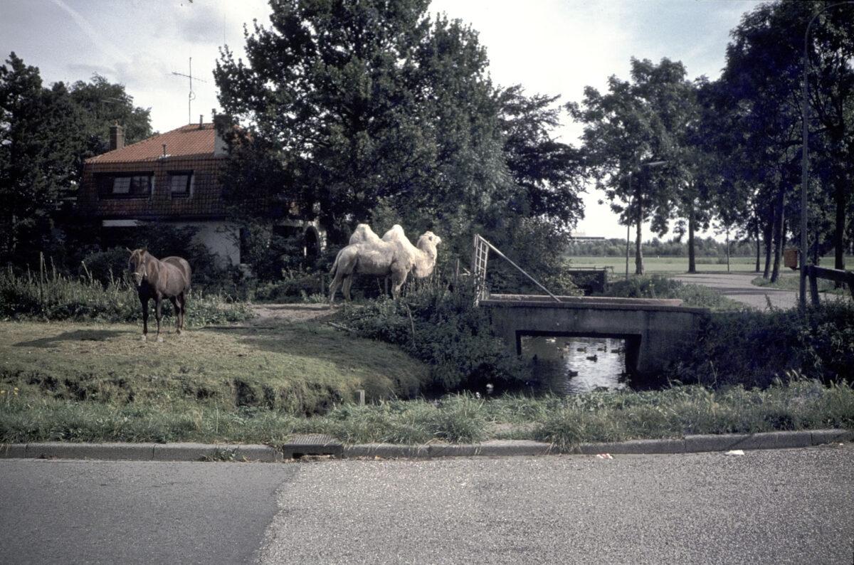 hoek Twintighoevenweg-Dubbeldamseweg Zuid - indebuurt Dordrecht