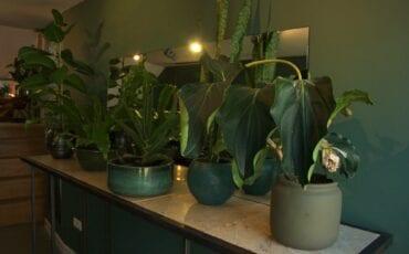 MENCO Browbar Pim Menco planten - wenkbrauwensalon Dordrecht