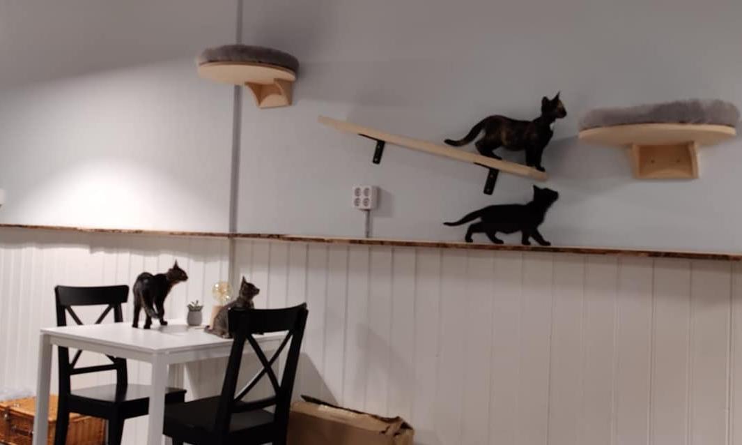 Kattencafé Stripe Dordrecht Vriesestraat
