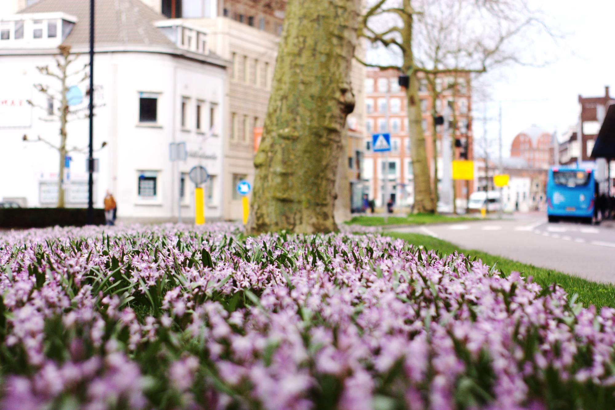 Lente voorjaar Dordrecht weersvoorspelling weer Johan de Wittstraat