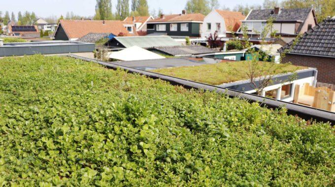 Groen dak Dordrecht Interpolis sedumdak aanleggen subsidie