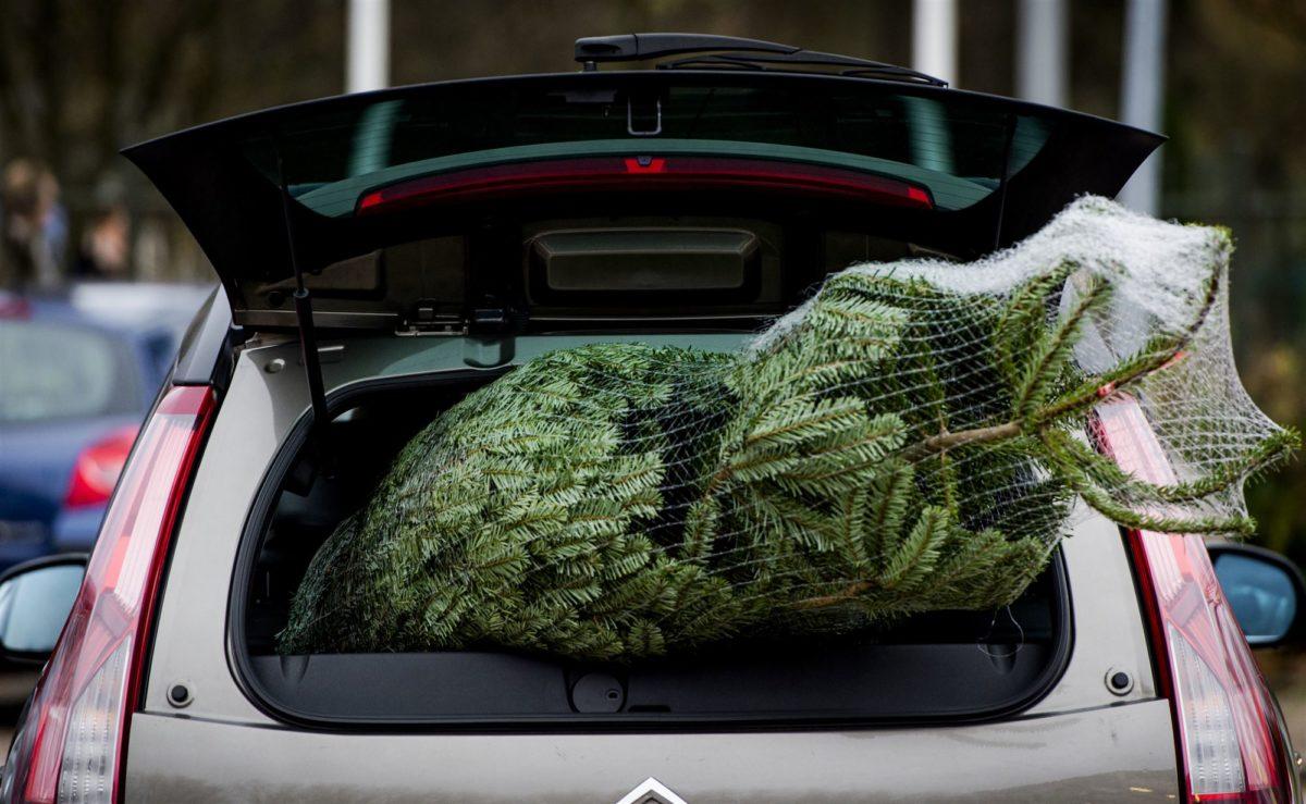 Kerstboom in auto