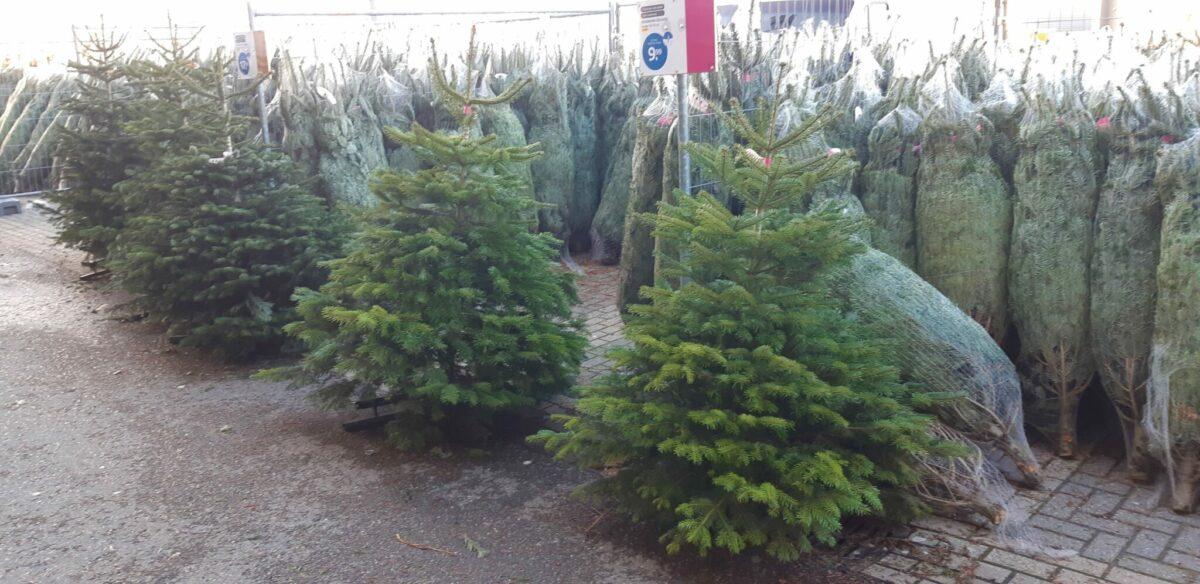 Kerstboom inspiratie; een Nordmann van Praxis