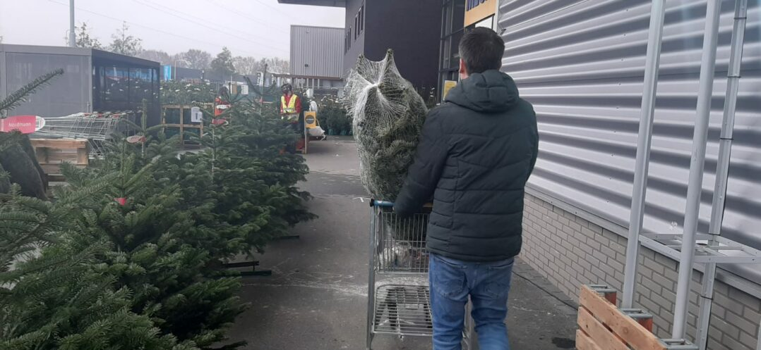 Kerstbomen Praxis
