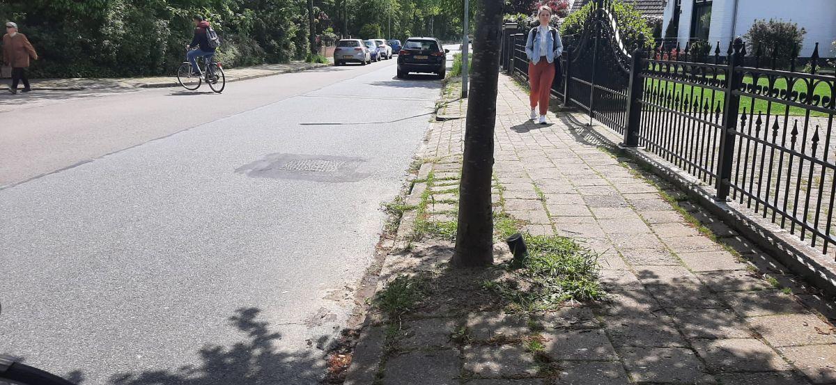 Drainage buis boom