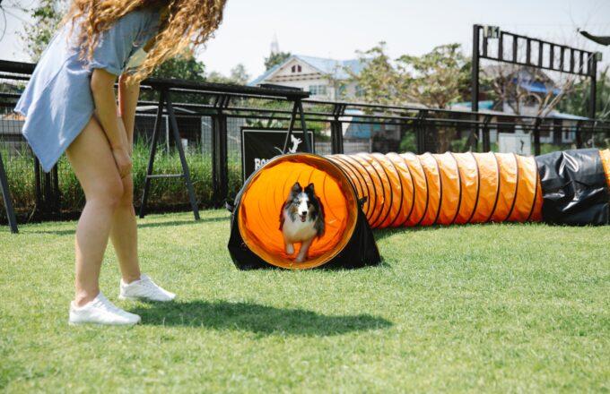Sporten met hond