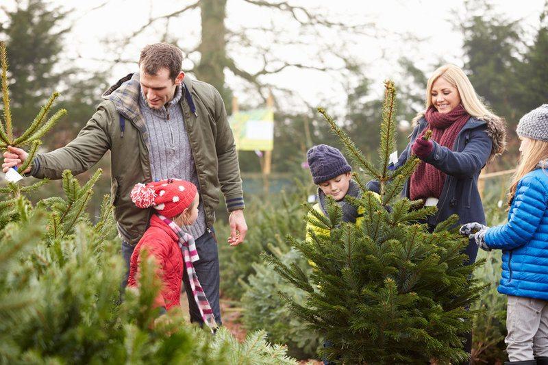 Kerstboom kopen Eindhoven