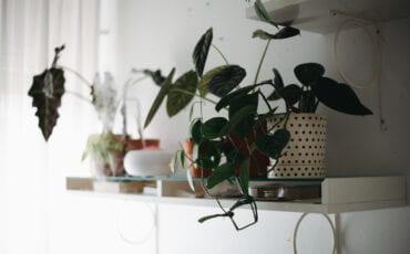 greeny lab