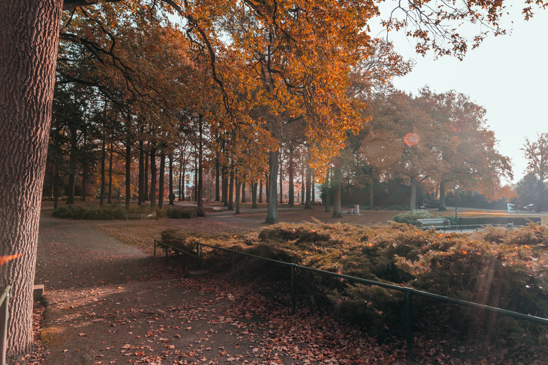 eindhoven herfst wandeling natuur