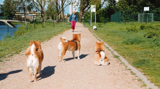 hondenlosloopterrein eindhoven