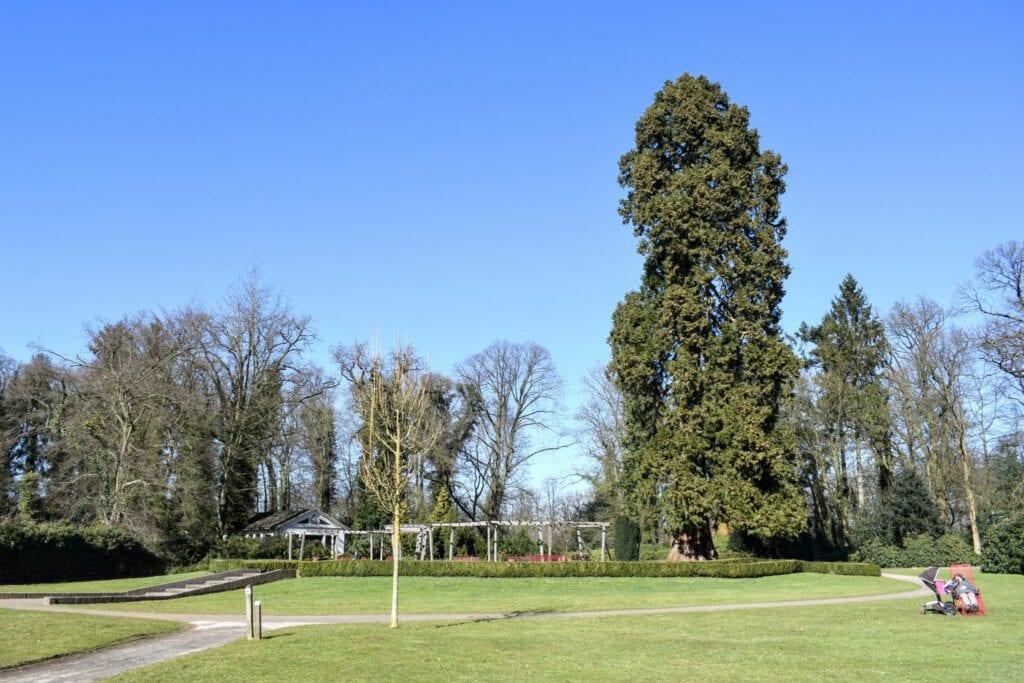 Mammoetboom Lederboerpark