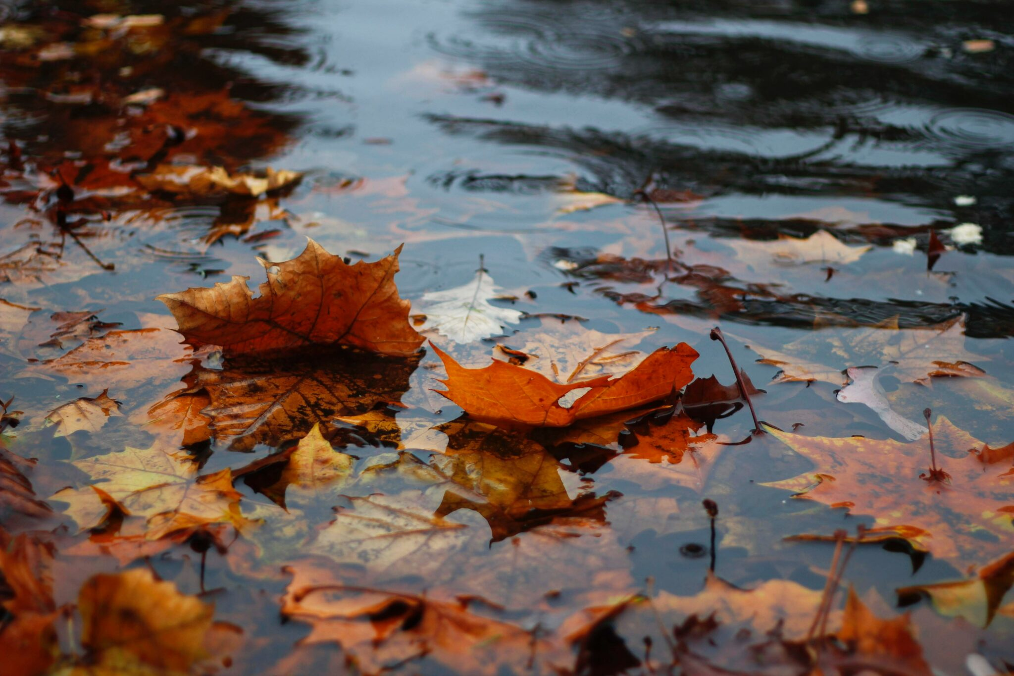 herfst regen bladeren